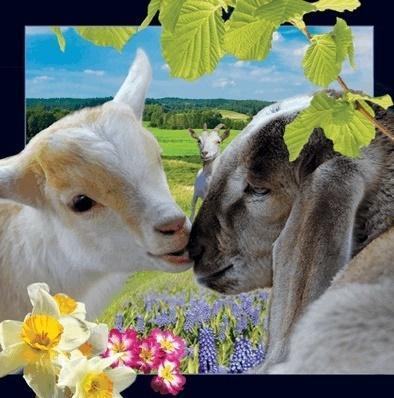 Wielkanocne baranki pocztówka 3D