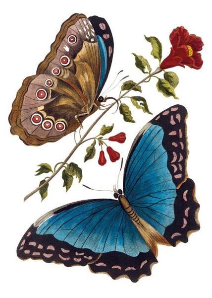Karnet B6 z kopertą Azure Blue Butterfly