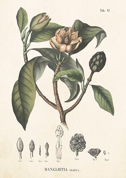 Karnet ST299 B6 + koperta Magnolia