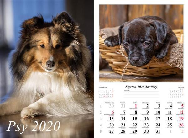 Kalendarz 2020 Psy 13 planszowy RADWAN