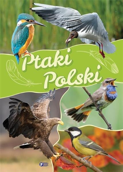 Ptaki Polski TW FENIX-335072
