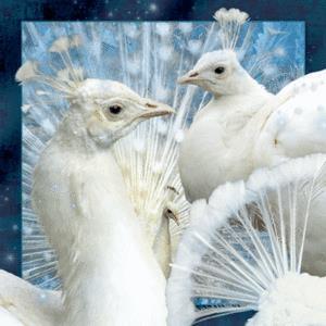 Magnes 3D Biały Paw