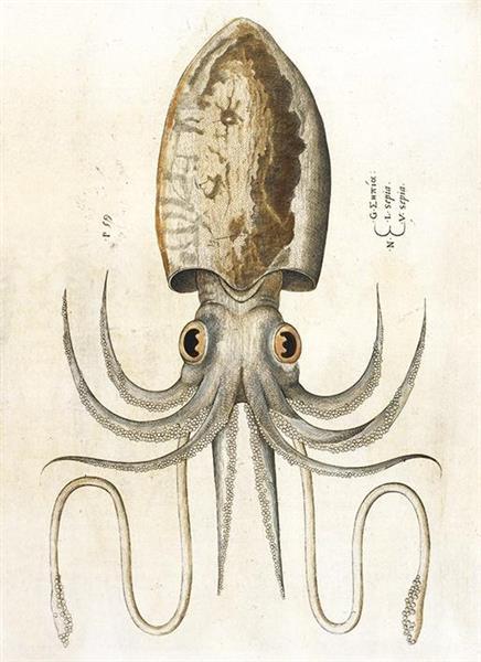 Karnet B6 z kopertą Squid
