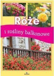 Róże i rośliny balkonowe OUTLET