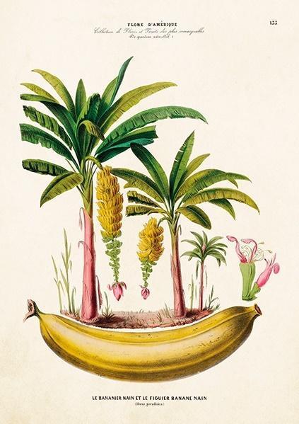 Karnet ST306 B6 + koperta Bananowce