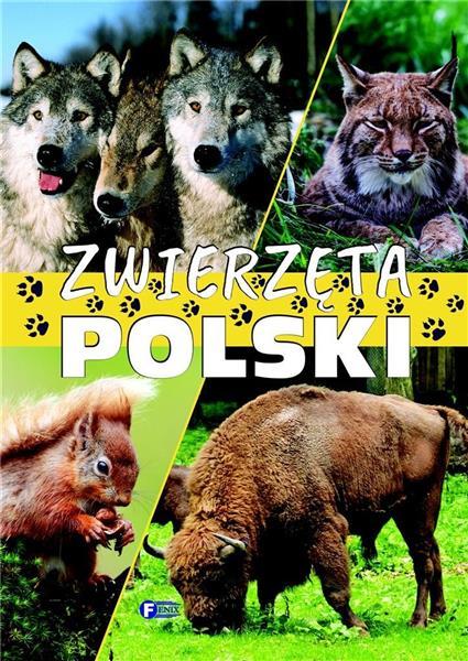 Zwierzęta Polski TW FENIX-335070
