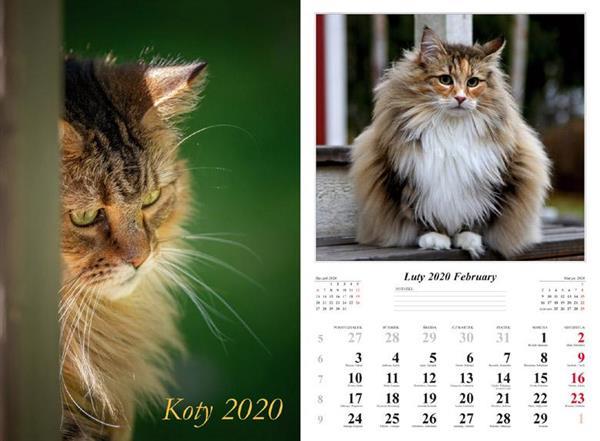 Kalendarz 2020 Koty 13 planszowy RADWAN