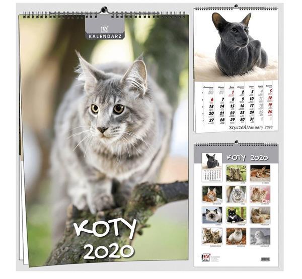 Kalendarz 2020 7 Plansz B3 - Koty EV-CORP