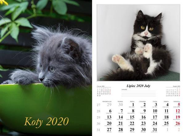 Kalendarz 2020 Koty 7 planszowy RADWAN