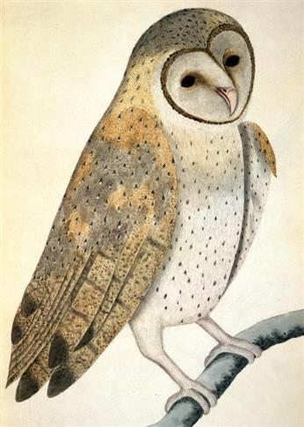Karnet B6 z kopertą Owl