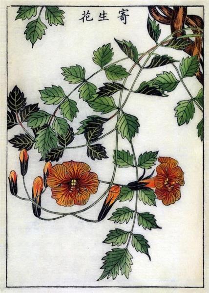 Karnet B6 z kopertą Trumpet Flower