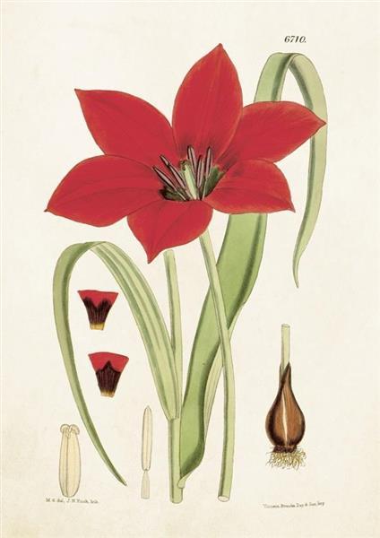 Karnet ST204 B6 + koperta Tulipan