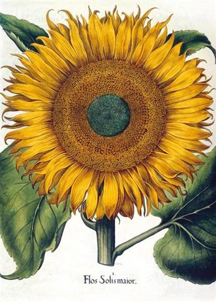 Karnet B6 z kopertą Sunflower