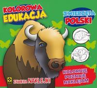 Kolorowa Edukacja Zwierzeta Polski outlet